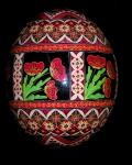 Ostrich Egg Poppies0403421
