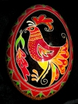 Rooster front view